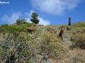 Rams Head Trail