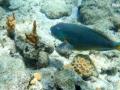 snorkeling-stjohn-usvi
