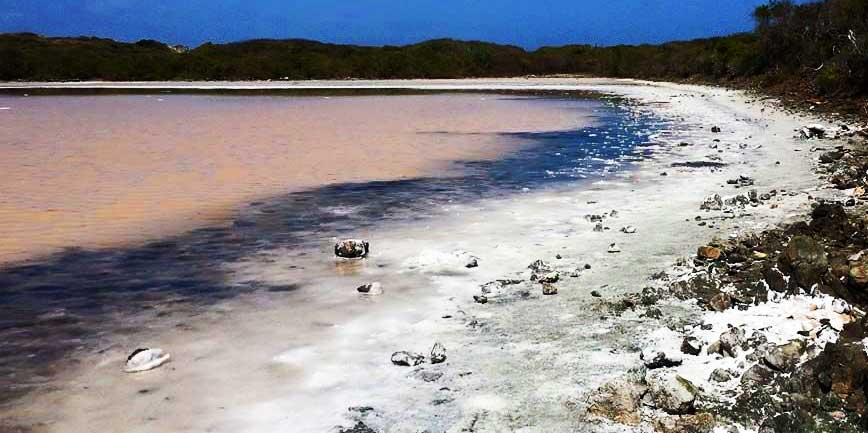 harvesting-salt-salt-pond-stjohn